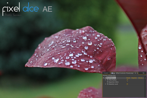 Fixel ALCE 2 AE - Feature Image