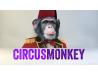 CircusMonkey Teaser